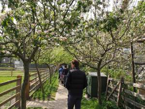 Farm in Blossom